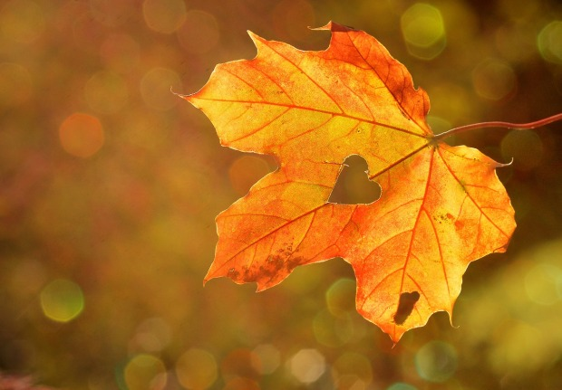 leaves, autumn, transitional, fashion, style