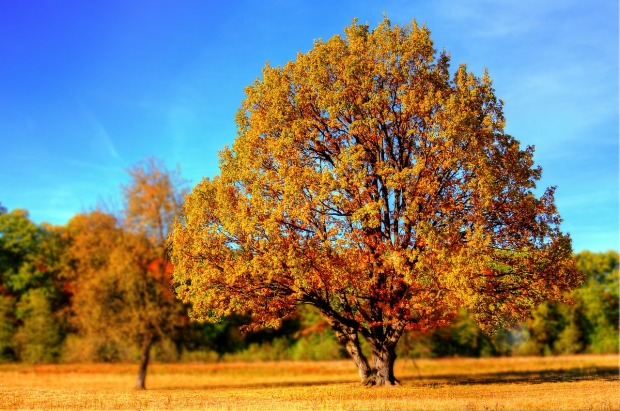 Autumn, Southport, Love